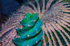 Cactus Spines. Close up of clusters of spines and needles of a cactus royalty free stock photography