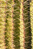 Cactus Spines Close Up Stock Photos