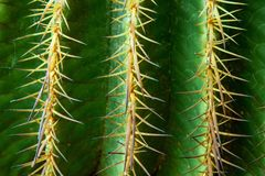 Cactus, Spur, Thorns, Green Stock Photo