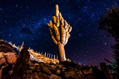 CACTUS WITH A STARRY BLUE SKY BACKGROUND