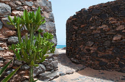 Cactus and stone walls in a marine landscape. Desert landscape and sea: Cactus and stone walls in a marine landscape Royalty Free Stock Image