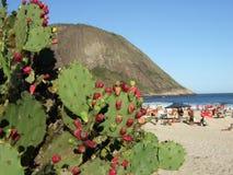Cactus in strand Itacoatiara Royalty-vrije Stock Afbeelding