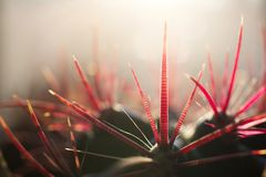 A cactus with striped pricks. Stock Images