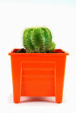 Cactus su priorità bassa bianca Immagini Stock