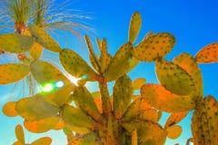 Cactus su terreno isolato su bianco Fotografia Stock