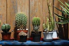 Cactus su uno scaffale nel giardino Immagini Stock
