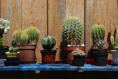 Cactus su uno scaffale nel giardino Immagine Stock