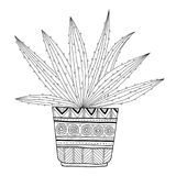 Cactus, succulent. Black and white illustration for coloring books, pages. Stock Image