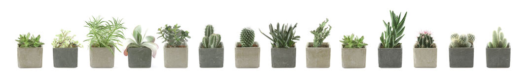 Cactus & Succulent Stock Photo