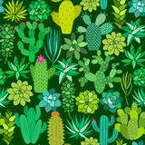 Cactus and succulent flower seamless pattern. Vector background Stock Photo
