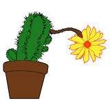 Cactus. succulent, home flowers, houseplants in pots, blossoms i Stock Photography