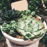 Cactus Succulent plants Arrangement in Bowl Stock Photo