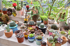 Cactus and Succulent plants Garden Royalty Free Stock Photography