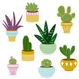 Cactus and succulent plants in pots. Vector Illustration of a set of colorful cactus and succulent plants growing in cute pots Stock Photography