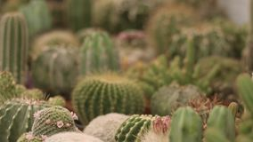 Cactus and succulent plants shop stock footage