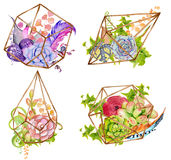 Cactus and succulent set with geometrical terrarium royalty free illustration