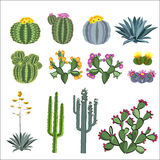 Cactus and succulent vector set. Royalty Free Stock Images