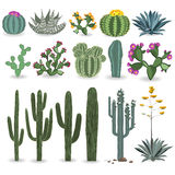 Cactus and succulent vector set. Cactuses, agave, and opuntia Stock Image