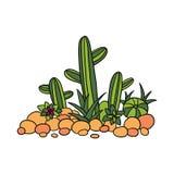 Cactus, succulentes and stones