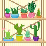 Cactus and succulents home plants in pots on wooden shelves vector Illustration stock illustration