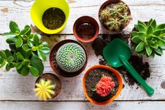 Cactus and succulents house plants background. Collection of various house plants, potting soil and trowel on white background. royalty free stock photos