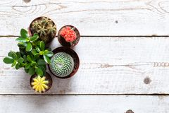 Cactus and succulents house plants background. Collection of various house plants on white wooden background. stock photos