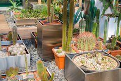 Cactus and succulents plants in garden Royalty Free Stock Photography