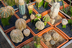 Cactus and succulents plants in garden Stock Photos
