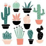 Cactus and succulents set vector illustration