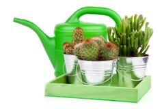 Cactus suculento foto de archivo libre de regalías