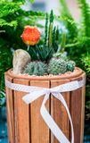 Cactus decorate in the garden. Cactus, sugar palm leaf, decoration in the garden Royalty Free Stock Image