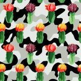 Cactus sui precedenti di camo Fotografie Stock Libere da Diritti