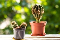 Cactus sul davanzale, orizzontale Fotografie Stock
