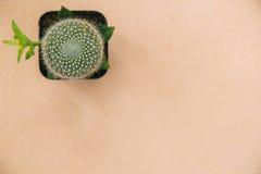 Cactus sul fondo di struttura e sullo spazio di carta della copia Fotografie Stock Libere da Diritti