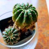 Cactus sul fuoco fotografie stock libere da diritti