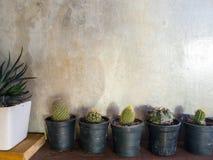 Cactus sul porcile del sottotetto della parete del cemento Immagini Stock Libere da Diritti