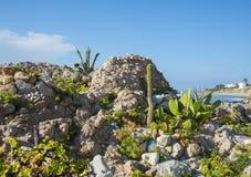 Cactus sulla costa del mar Mediterraneo Immagine Stock Libera da Diritti
