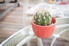 Cactus sulla tavola con in vignetted in Fotografie Stock Libere da Diritti