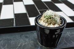 Cactus sulla tavola del vaso da fiori Immagini Stock
