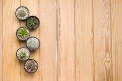 Cactus sulla tavola di legno Fotografie Stock