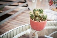 Cactus sulla tavola, in vignetted in Fotografie Stock