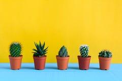 Cactus sullo scrittorio con wal giallo Fotografia Stock Libera da Diritti