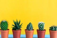 Cactus sullo scrittorio con wal giallo Fotografia Stock