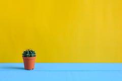 Cactus sullo scrittorio con wal giallo Fotografie Stock Libere da Diritti