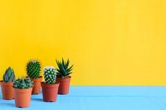 Cactus sullo scrittorio con wal giallo Immagine Stock
