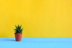 Cactus sullo scrittorio con wal giallo Immagini Stock Libere da Diritti