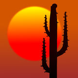 Cactus and sun. Desert sunset with cactus silhouette and sun Royalty Free Stock Photo