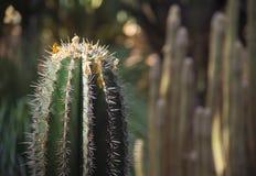 Cactus among the sun glare stock photo