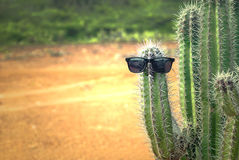 Cactus with sunglasses Stock Photos