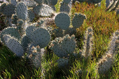 Cactus. On a sunny hill Royalty Free Stock Image